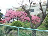 2010_0409tokyo0021.JPG